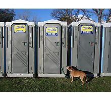 Porta Dog Photographic Print