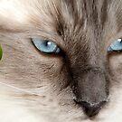 Sharp Blue Eyes by Mark van den Hoek
