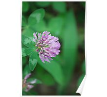 Perfect Purple Clover Poster