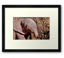 THE AFRICAN ELEPHANT – Loxodonta Africana Framed Print