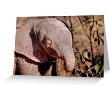 THE AFRICAN ELEPHANT – Loxodonta Africana Greeting Card