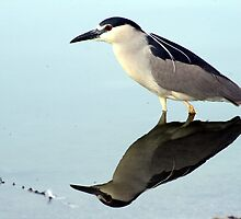 NIght Heron Reflections by RichImage