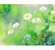 Daisies and Forget Me Not Flowers Photographic Print