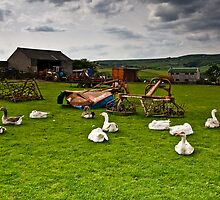 geese colne valley by Jean Bashford