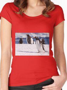 Gentoo penguins (Pygoscelis papua). Antarctica Women's Fitted Scoop T-Shirt