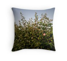 hedge rose knayton north yorkshire Throw Pillow