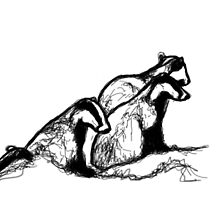 Badger sett by patricia shrigley
