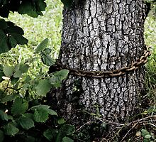 tree with chain by Jean Bashford