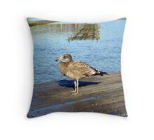 Pacific Gull Throw Pillow