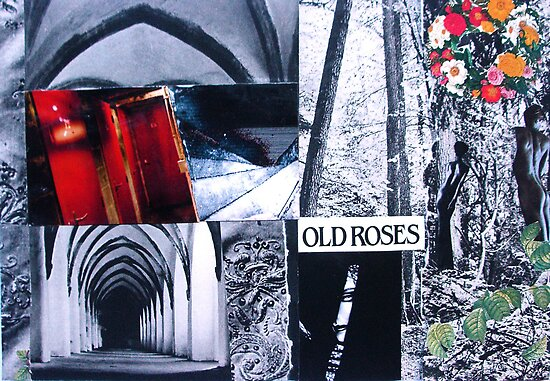 Old Roses by Jenny Davis