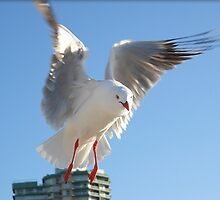 Seagull by JuliaWright