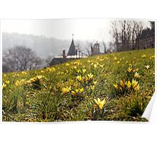 Yellow Crocus flowers above the city Poster