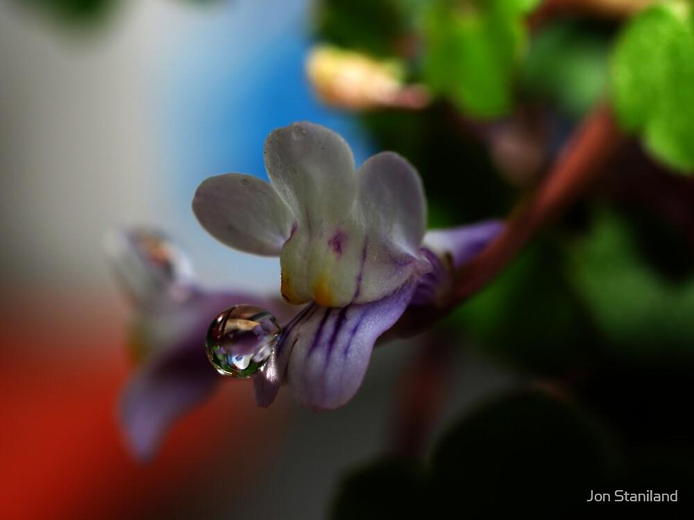Beauty Spot by Jon Staniland