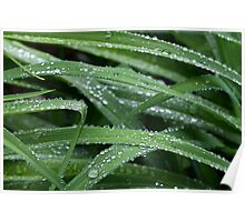 Green With Rain Drops Poster