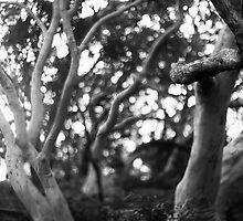 Koala bent by Mark Llewellynn