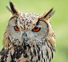 Eagle Eye's by hillphotography