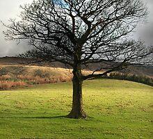 Tree - Greetings card by Jude Gidney