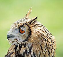 Eagle Eye by hillphotography