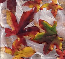 Feathers and Leaves by Elaine Teague