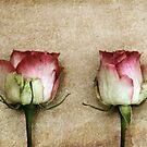 Two by Anne Staub