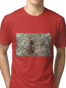 Koala in a tree, Morialta Conservation Park, S.A. Tri-blend T-Shirt