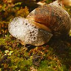 Bubble Blowing Snail by karenkirkham
