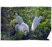 Three Egrets Poster
