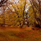 Autumn Time in Malmsbury Botanical Gardens by haymelter