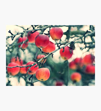 winter apples Photographic Print