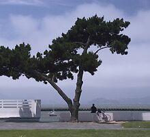San Francisco Bay by Anne Frizell