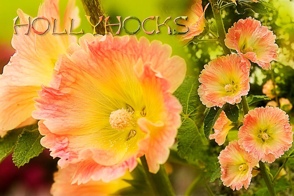 Sweet Hollyhocks by Trudy Wilkerson
