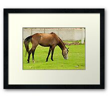 Horse Grazing in a Pasture Framed Print