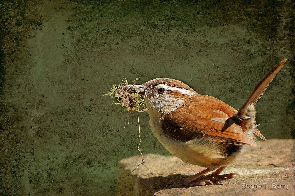 Mother Wren at Work by Bonnie T.  Barry