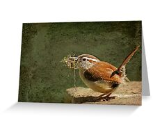 Mother Wren at Work Greeting Card