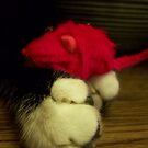My Red Mouse by Terri Chandler