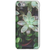 Garden Green Succulents iPhone Case/Skin