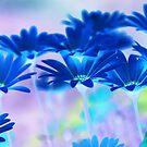 Bluemination by Robin Webster