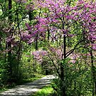 A Stroll In Redbud by AngieDavies
