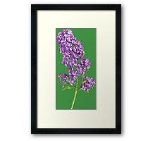 Beautiful lilac branch Framed Print