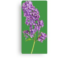Beautiful lilac branch Canvas Print