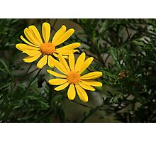 Two Yellow Flowers in a Garden Photographic Print