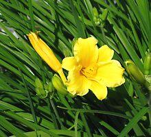 Golden Bloom by Marta Boulden