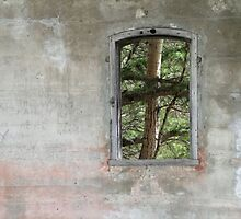 ...window to yesterday by phillip wise
