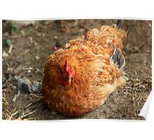 Brown Rooster in a Field Poster