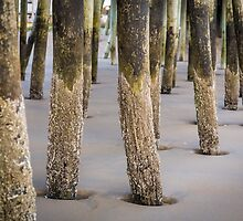 Under the Pier by PhotosByHealy