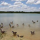 Nowbody Here But Us Geese by CarolM