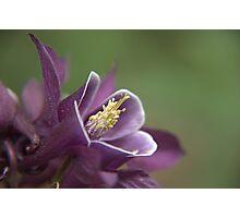 Garden Flower Photographic Print
