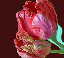 Two Red Tulips Vector Isolated by taiche