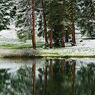 Reflections at Montecito Lake by Susan Gary