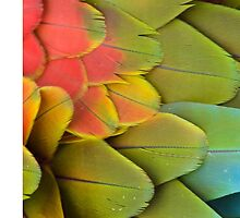 Parrot feathers by Vitalia